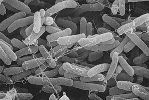 Зачем нужен биофильтр для септика?